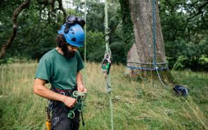 Comment choisir son harnais d'élagage d'arbre