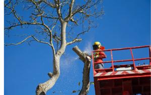 Que faire lorsque l'arbre du voisin vous gêne