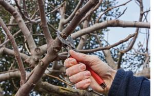 outils pour taille d'arbres